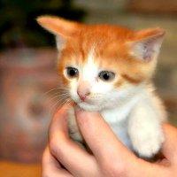 Я еще маленький котёнок. :: Михаил Столяров