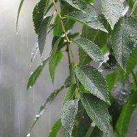 Июльский дождь :: Starik Efimov