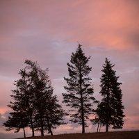 Деревья в закате :: Андрей
