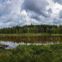 Лесное озеро. :: Виктор Грузнов