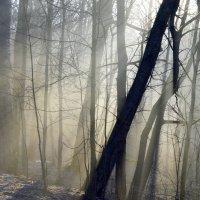 В весеннем лесу....... :: Юрий Цыплятников