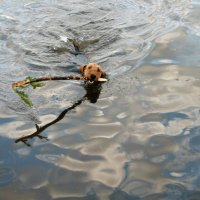 Водные процедуры :: Натали Пам