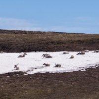 Отдых на снегу. :: Юрий Харченко