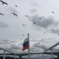 Чайки и мост :: Ekaterina Podolina