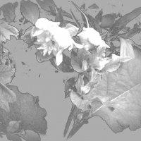 Расцветают лопухи :: Marina Bernackaya Бернацкая