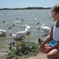 Лебеди :: Валерия Тарасова