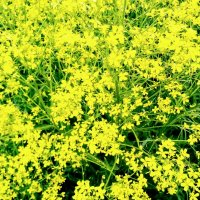 Полевые цветы :: Daria Zhdanova
