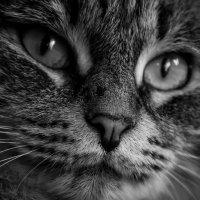 Sim cat :: Яна Васильева