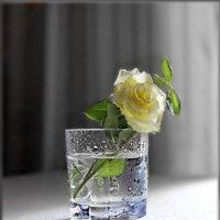 Интересен символ жёлтой розы: :: Людмила Богданова (Скачко)
