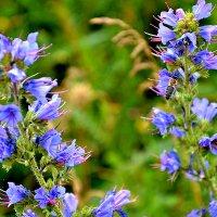 Пчелки и цветы. :: Михаил Столяров