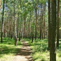 Тропинка в лесу :: Лидия (naum.lidiya)