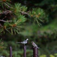 Птички невелички :: Андрей + Ирина Степановы