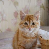 Еще котейка) :: Александра Юдаева
