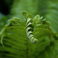 Какое то растение :: Алиса Нелеп