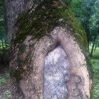 природа :: Anna Sokolovsky