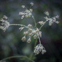 Салют дождя :: Екатерина Рябинина