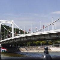 Белый мост Эржбет в Будапеште. :: Alla Shapochnik