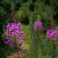 Полевые цветы :: Марк Э