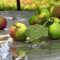 Яблоки из сада :: Татьяна Смоляниченко