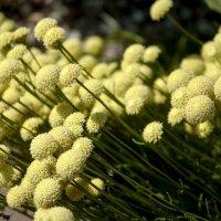 Южные цветы. :: Николай Сидаш