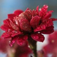 Аленький цветочек :: Татьяна Панчешная