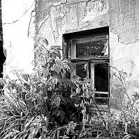Окно и клумба :: Marina Bernackaya Бернацкая