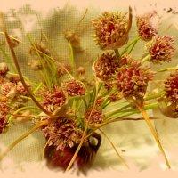 чеснок тоже цветет :: Люша
