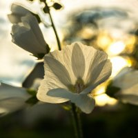 Цветик на просветик :: Rost Pri (PROBOFF-RO) Прилуцкий Ростислав