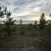 Северодвинск. Прогулка по ягринскому берегу Белого моря (5) :: Владимир Шибинский