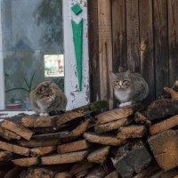 Кошачьи семейные посиделки :: Сергей Шичанин