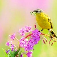Луговые  заботы птиц :: Влад