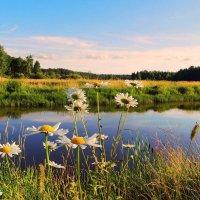 А по берегам ромашки цветут :: Павлова Татьяна Павлова