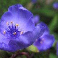 Фиолетовые оттенки :: spm62 Baiakhcheva Svetlana