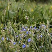 цветы :: Александр Солуянов