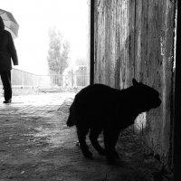 Черный кот и прохожий с зонтом :: Сергей Веснин