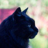Black cat :: Олег Пученков
