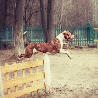 Мир животных :: Натали Пам