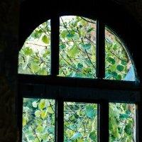 Окно в природу :: Galina Pryadko