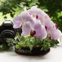 Кэнон и орхидеи :: Aнна Зарубина