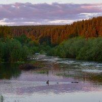 Вечер на реке. :: Наталья