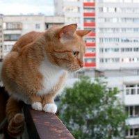 Кот на балконе :: Anatolyi Usynin