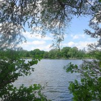 Озеро обнимают вокруг стоящие деревья :: Маргарита Батырева