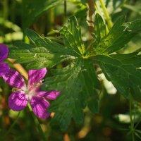 Листочек и цветочек :: Владимир Гилясев