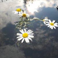 Среди облаков :: Ольга