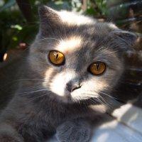 Заглянуло солнышко в окошко и лучом пощекотало кошку. :: Людмила Богданова (Скачко)