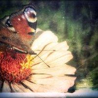 ..Пускай душа всегда цветёт.. :: Ирина Сивовол