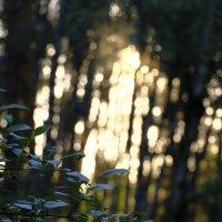 Игры со светом :: Андрей Михайлин
