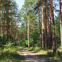 К августу готовятся леса... :: Лесо-Вед (Баранов)