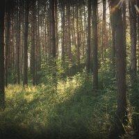 В дремучем лесу... :: Роман Царев