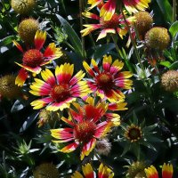 Городские цветы :: Владимир Бровко